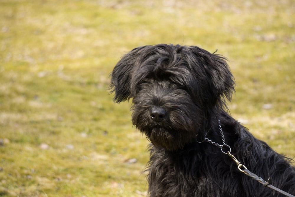 Bild på svart hund